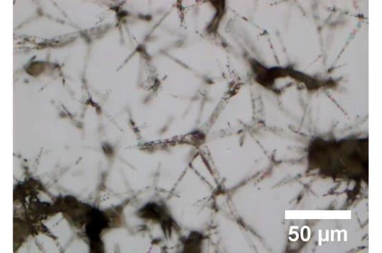 Research team produces extremely co<em></em>nductive hydrogel for medical applications