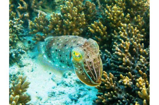 Insights from color-blind octopus help fight human sight loss